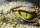 PETA Snaps at Hermes | Fashion Label's Crocodile Farms Slammed By Animal Rights Group